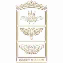 Stencil insecten 30 x 45 cm