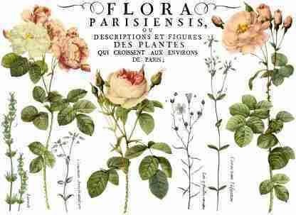 Transfer Flora Parisiensis