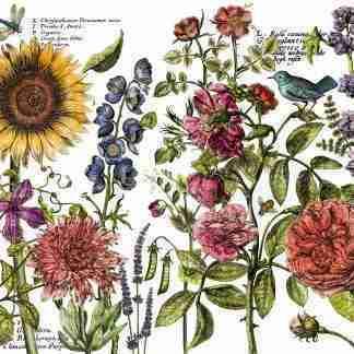 IOD transfer Botanist journal
