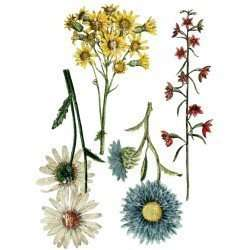 IOD transfer Wild flower botanicals