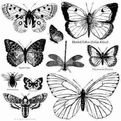 IOD stempel Butterflies