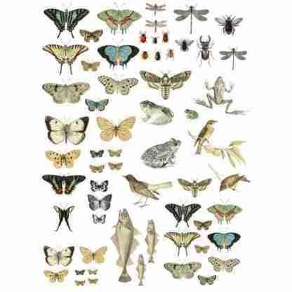 Entomology Etcetera IOD transfer