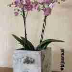 Workshop Iron orchid designs technieken
