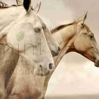 MINT decoupage paper Sepia Horses