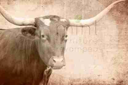 MINT decoupage papier Texas Longhorn