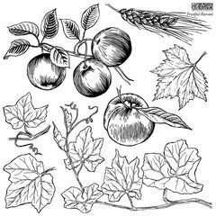 Iron orchid designs stamp Fruitful Harvest