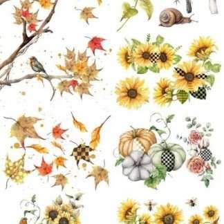 """A1 (Artists first) Transfer - """"Fall into Whimsy"""""""